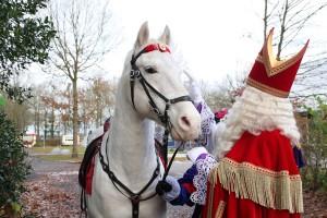 Sinterklaas paard