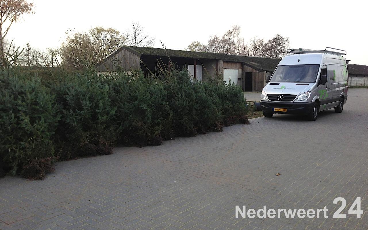 De Krielkes Verkopen Kerstbomen Bij Verleg Hoveniers Nederweert24