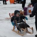 schaatsen, sarsven en de banen, nederweert, slee