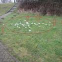 hondenpoepzakjes op gras