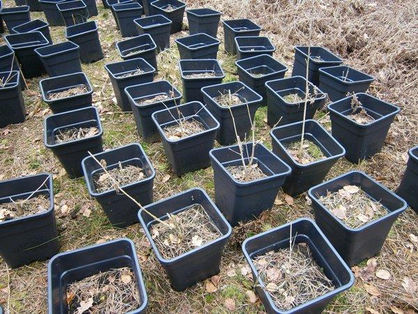 Oude hennepplantage gevonden in Weerterbos