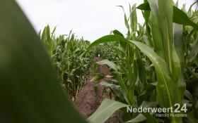 2013-07-28-Maisdoolhof-Nederweert-Eind-bij-IJsboerderij-Gommers-018