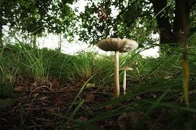 paddenstoelen ontdektocht in de groote Peel