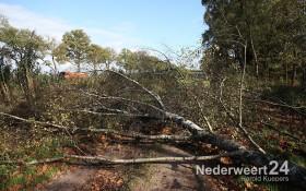 Boom over de weg langs Noordervaart Nederweert