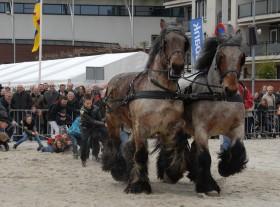450 jaar Weerter Paardenmarkt