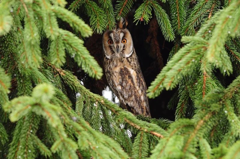 Citaten Over Uilen : Lezing over uilen in nederweert en omgeving