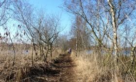 Oudjaarswandeling De Groote Peel