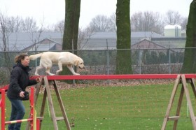 hond balk school