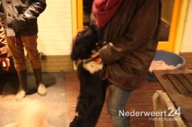 Hond onder de grond in bos Banendijk Nederweert Eind