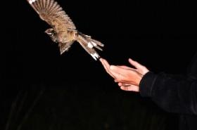 Nachtzwaluwexcursie in De Groote Peel - foto Jap Smits:Staatsbosbeheer