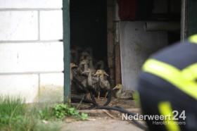 Brand in stal met eenden Stramproy