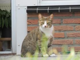 Kat bibi vermist Nederweert