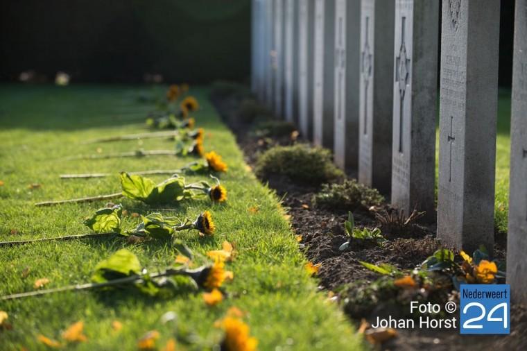 Nederweert Herdenking Britse begraafplaats zonnebloemen