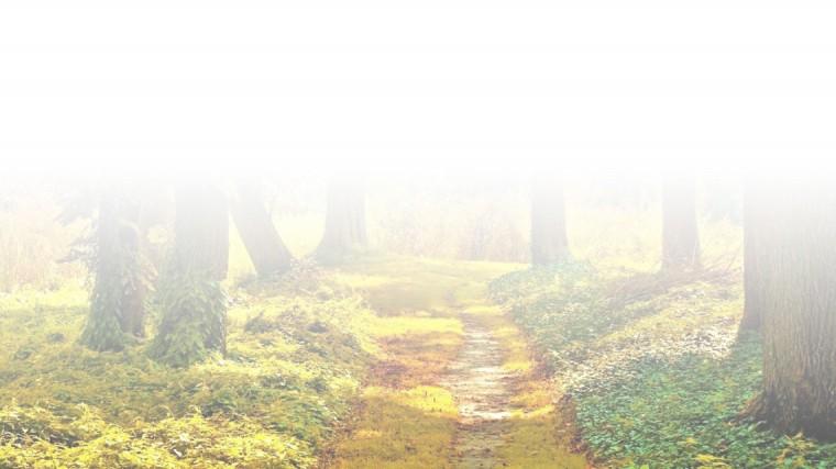 rouwbericht-bos