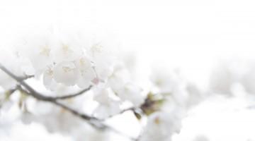 rouwbericht-witte-bloem