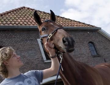 Cursus paarden voor leerlingen