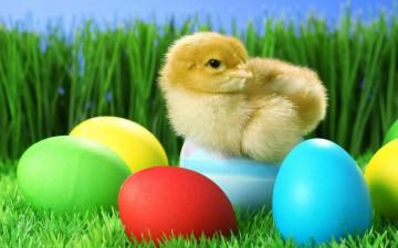 pasen eieren