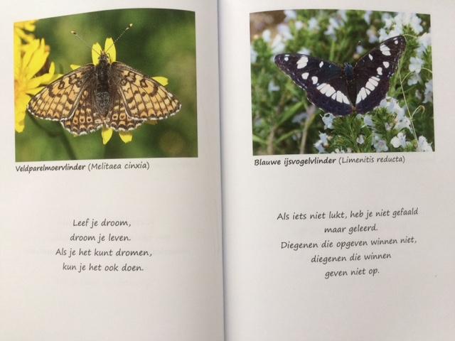 Kracht van vlinders 2