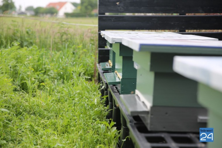 Bijen Nederweert 3931
