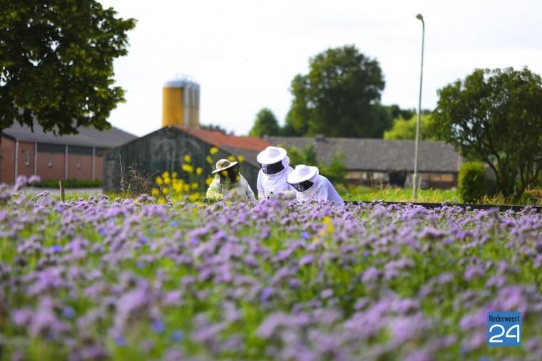 bijen Nederweert 4442