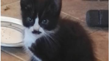 Gevonden: Jong katje