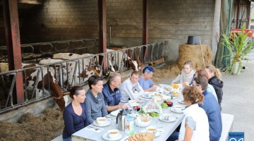 Lunch tussen de Koeien