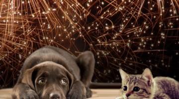 Lezing over vuurwerkangst bij huisdieren