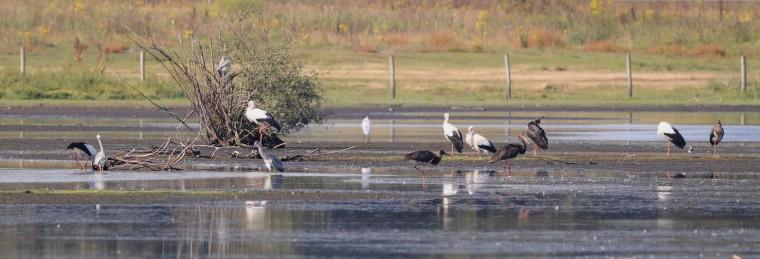 Basiscursus Vogels kijken in Nederweert