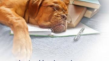 Lezing over hondengedrag