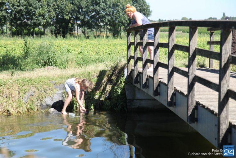 Zomer in Nederweert Richard van der Steen