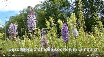 Bijzondere orchidee soorten in Limburg – Hans Melters (Video)