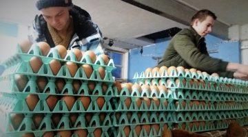Een Ospels ei hoort erbij (Foto's)