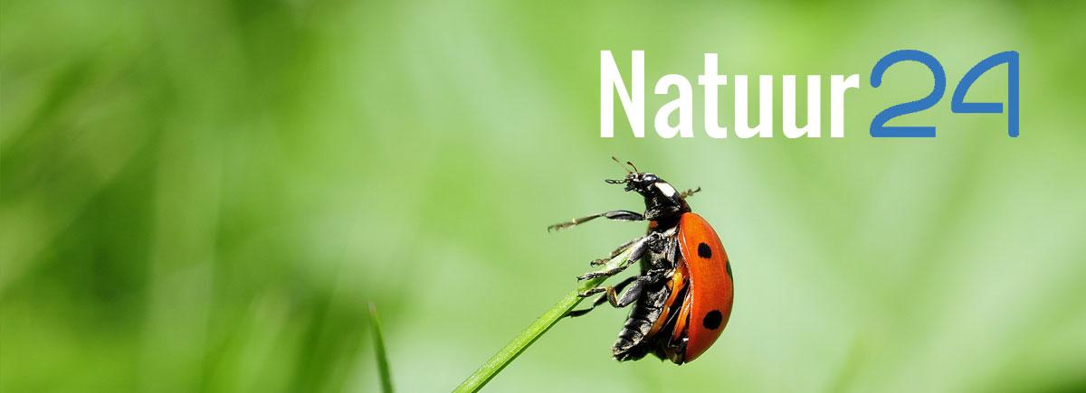 natuur24