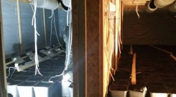 Hennep gevonden in een loods in Stramproy
