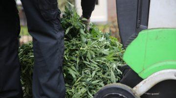Politie ruimt hennepkwekerij in tussenwoning