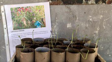 Tuinieren is Mindfulness