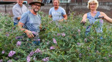 OPROEP: Samen vlinderstruiken van Vlinderpaât snoeien