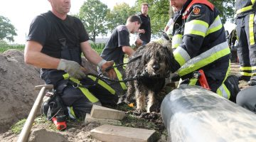 Brandweer Meijel redt hond uit duiker
