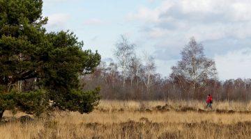 Nationaal Park De Groote Peel verrast; ook in de winter