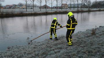 Brandweer haalt ree uit Zuid-Willemsvaart