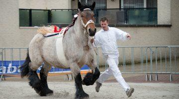 Paardenmarkt Weert 2018, koud en guur (Foto's)