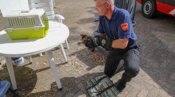 Brandweer redt kitten uit parkeergarage SJG Weert