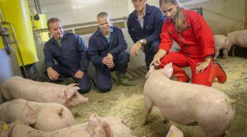 Boeren van Nederweert: 'Dierziekten voorkómen is veel beter dan genezen'