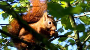 Activiteitenprogramma oktoberNationaal Park De Groote Peel