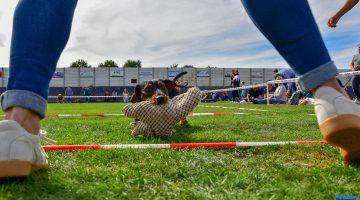 Teckelrennen Ospeldijk 2018