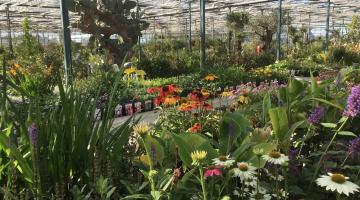 Plantencentrum Ospel breidt assortiment tuinplanten uit