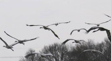 Activiteiten november – Nationaal Park De Groote Peel
