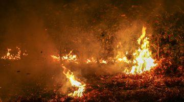 Brandweer blust brandende heg