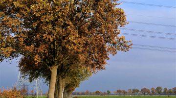 Geen onnodige bomenkap: het kan ook 'anders'!