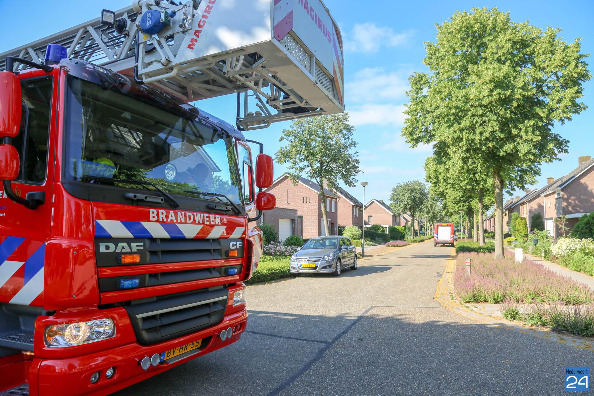 Kat met hoogtevrees van dak gered in Ospeldijk - Nederweert24 - Nederweert24